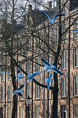Seagulls - p226m1516530 by Sven Görlich