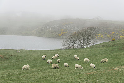 Schafe auf der Weide - p354m1043353 von Andreas Süss