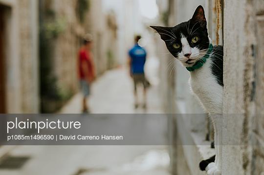 Katze in der Altstadt von Trogir - p1085m1496590 von David Carreno Hansen