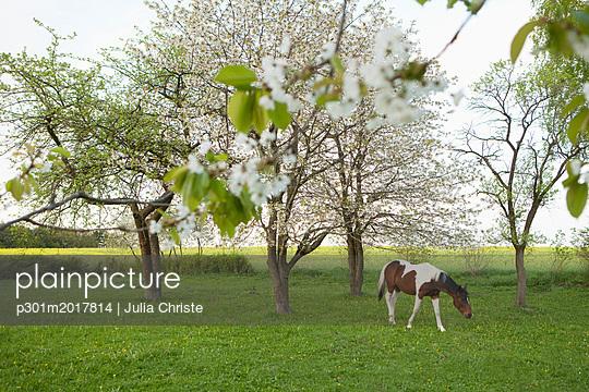 p301m2017814 von Julia Christe