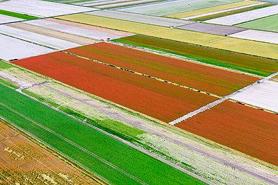 Flower farm - p1120m925616 by Siebe Swart