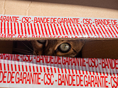 Cat inside cardboard box - p1522m2142161 by Almag