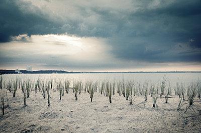 Dünenschutz am Timmendorfer Strand  - p416m990812 von Thomas Schaefer