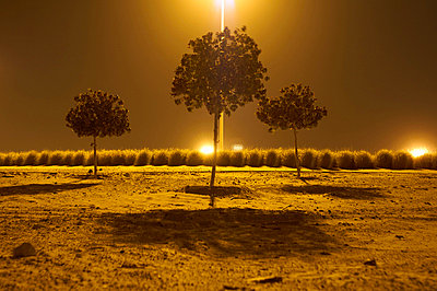 Streetlight over trees at night - p429m713122 by Peter Muller