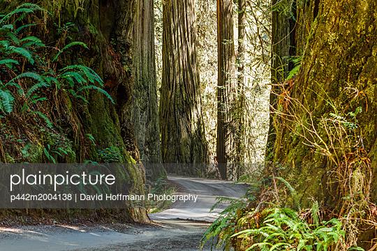 p442m2004138 von David Hoffmann Photography