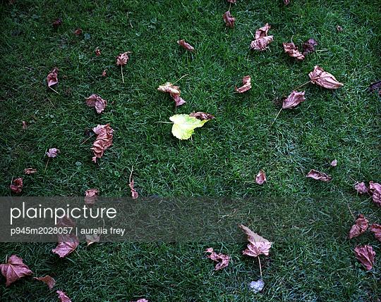 Blätter auf dem Rasen - p945m2028057 von aurelia frey