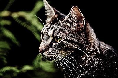 Head of a cat - p1221m1064169 by Frank Lothar Lange