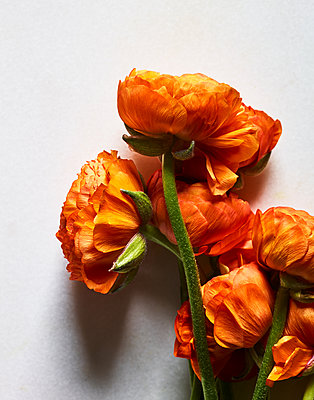 Orange coloured flowers - p1397m2054645 by David Prince