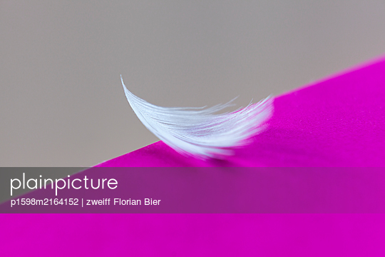 White feather against purple background - p1598m2164152 by zweiff Florian Bier