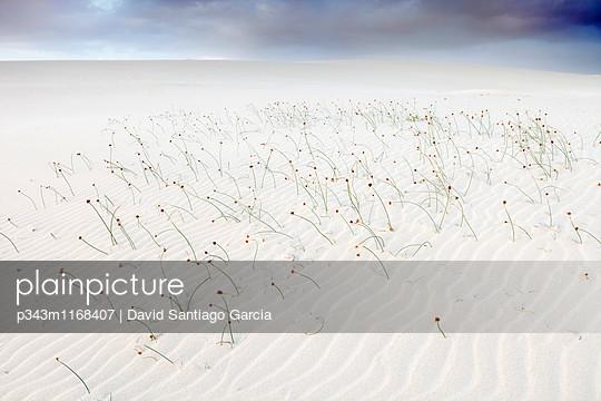 p343m1168407 von David Santiago Garcia