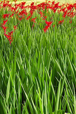 Red and green - p1032m903741 by Fuercho