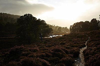 Wald im Cairngorm Nationalpark, Schottland - p1145m1558738 von Kerstin Lakeberg