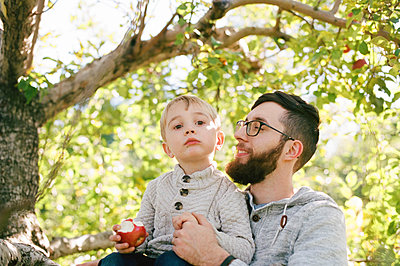 A father and son in an apple orchard. - p1166m2171971 by Cavan Images