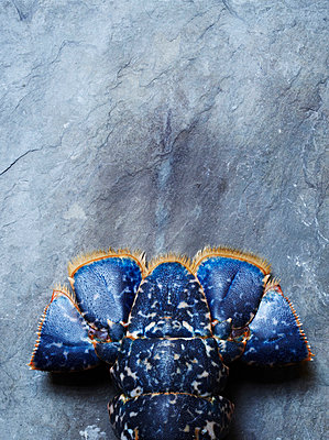 Blue Lobster Tail - p938m754450 by Christina Holmes