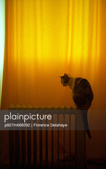 Cat alone at home - p927m668392 by Florence Delahaye