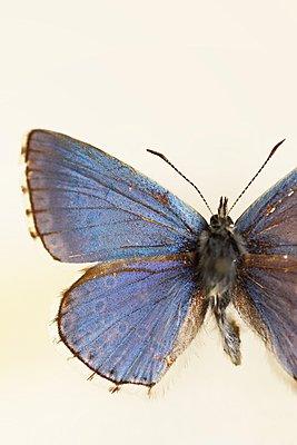 Macro butterfly - p1054m2278062 by Maria Kazvan