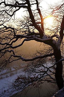 Germany, Saxony, Elbe Sandstone Mountains, Bastei area in winter - p300m2059041 by Thomas Jäger