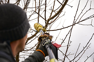 Male farmer with hedge clippers pruning bare tree branch at orchard - p300m2276584 by Sebastian Dorn