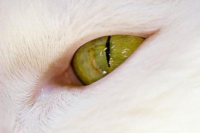Katzenauge - p4170172 von Pat Meise
