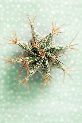 Cactus - p5700072 by Elke Röbken