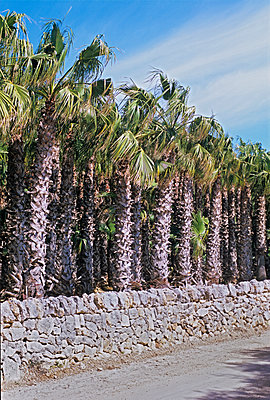 Palms at the street - p885m907427 by Oliver Brenneisen