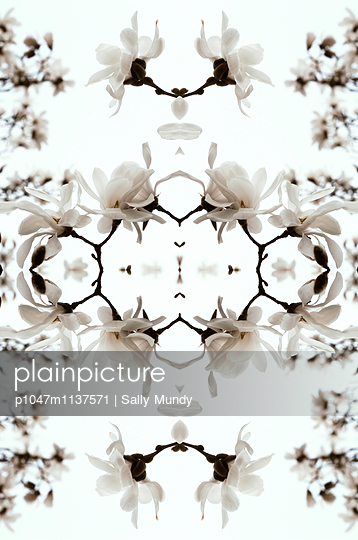 Abstract kaleidoscope of white magnolia flowers - p1047m1137571 by Sally Mundy