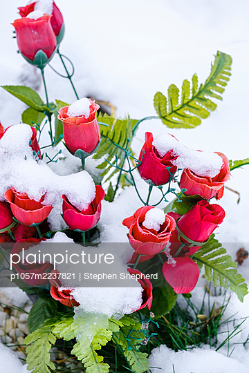 Great Britain, Snow covered plastic flowers on a grave  - p1057m2237821 by Stephen Shepherd