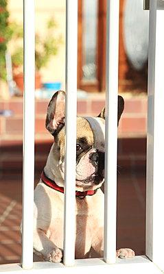 Waiting dog - p045m901697 by Jasmin Sander