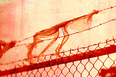 Barbed wire fence with stuck bag - p1614m2208722 by James Godman