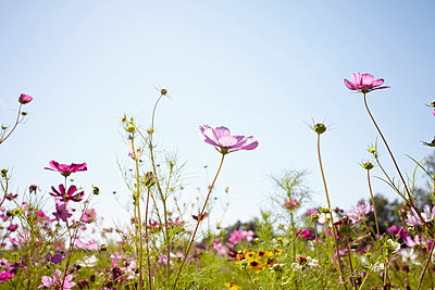 Wild flowers - p464m856485 by Elektrons 08