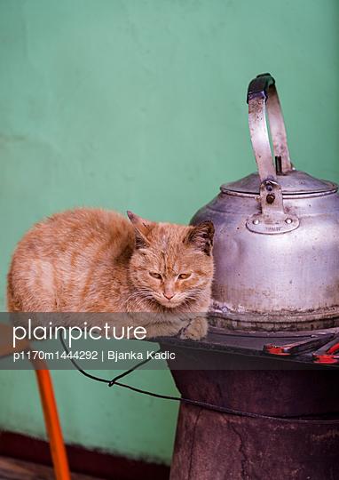 Katze neben Teekessel - p1170m1444292 von Bjanka Kadic