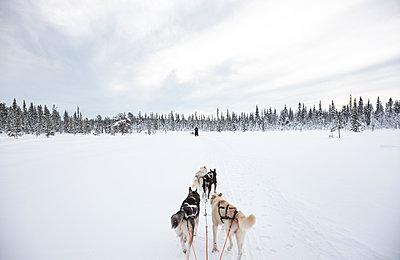 Hundeschlittentour durch Lappland - p1198m1122861 von Guenther Schwering
