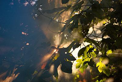 Geheimnisvoller Garten - p1553m2142516 von matthieu grospiron