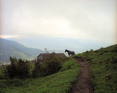 Single horse on slope in the Andes - p945m1476406 by aurelia frey