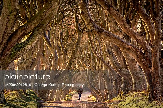 p429m2019810 von George Karbus Photography