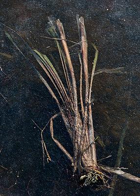 Eingefrorenes Gras - p1649m2253062 von jankonitzki