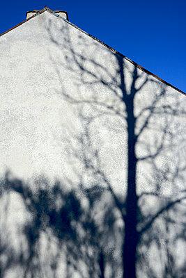 Tree shadow on a wall - p813m891700 by B.Jaubert