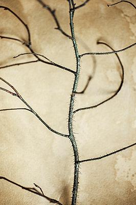 Branch - p971m1225807 by Reilika Landen