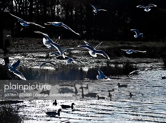 Birds being fed - p378m1001000 by George Solomonides