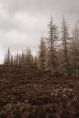 Tannenwald in den schottischen Highlands - p1477m2038947 von rainandsalt