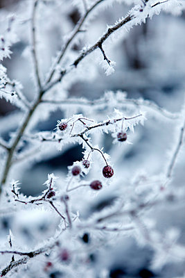 Frost - p1790851 von Roland Schneider
