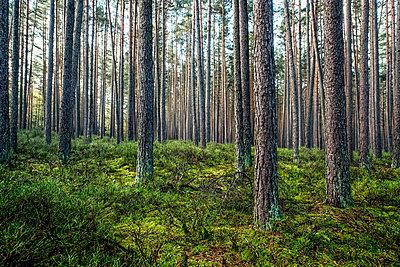 Wald - p947m945797 von Cristopher Civitillo