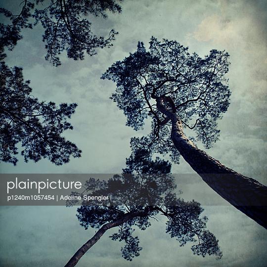 Treetop - p1240m1057454 by Adeline Spengler