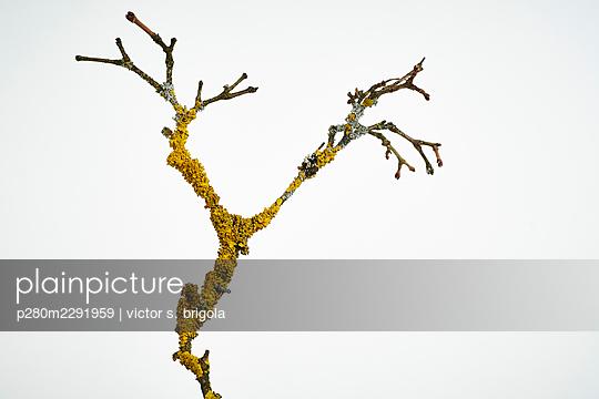 Twig - p280m2291959 by victor s. brigola