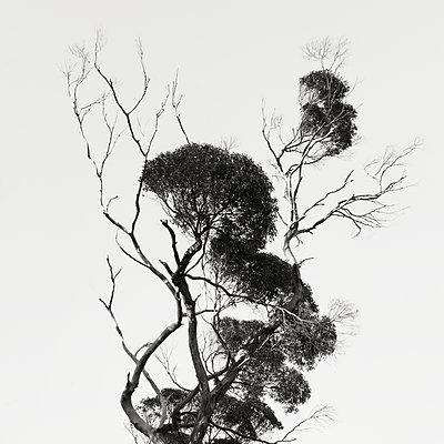 Slender branches on a tree - p1154m2289175 by Tom Hogan