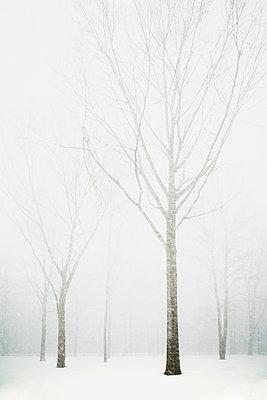Trees in winter fog - p1427m2254881 by Chris Hackett