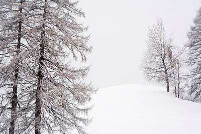 Schneebedeckte Landschaft mit Baeumen - p627m672294 by Kirsten Nijhof