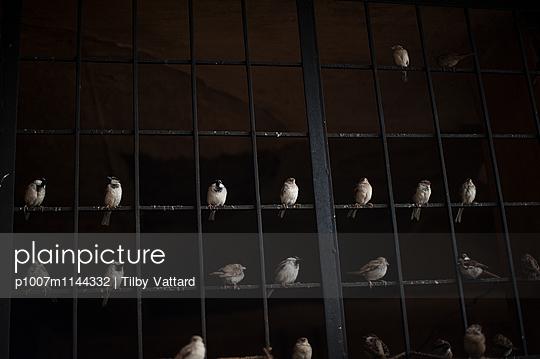 Birds  - p1007m1144332 by Tilby Vattard