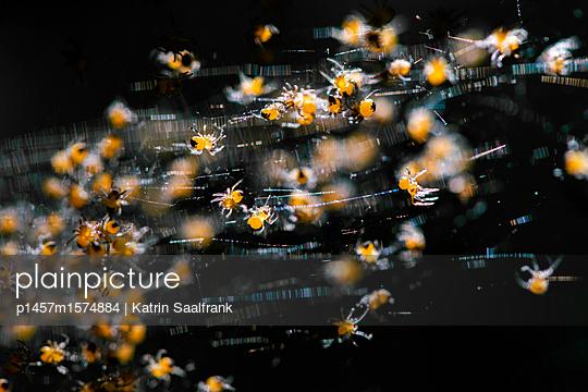 Spinnenbabys - p1457m1574884 von Katrin Saalfrank