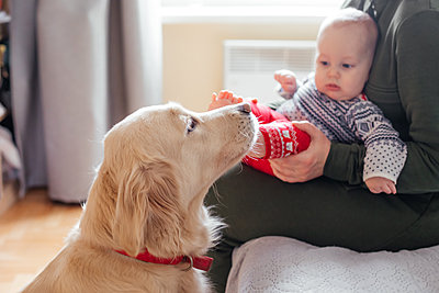 Training dogs to behave with little children - p1166m2269091 by Cavan Images